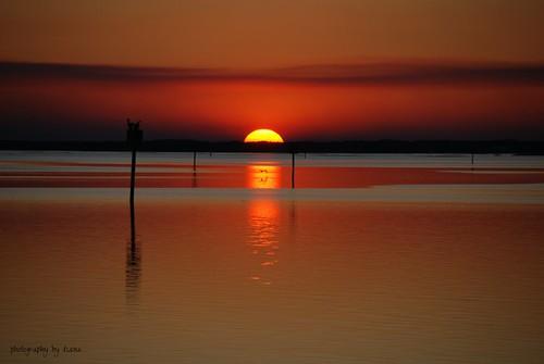 ocean sunset red sky orange sun beach nature water birds florida shellpoint
