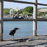 Viajefilos en San Cristobal, Galapagos 003