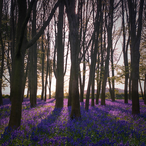 landscape nature valeofwhitehorsedistrict england unitedkingdom