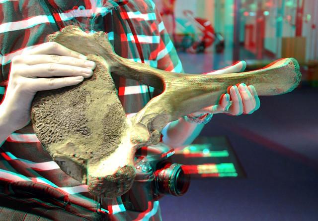 Naturalis 3D