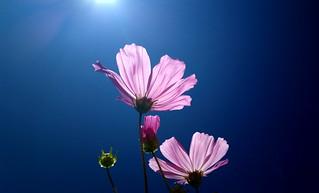 Flower | by solarisgirl