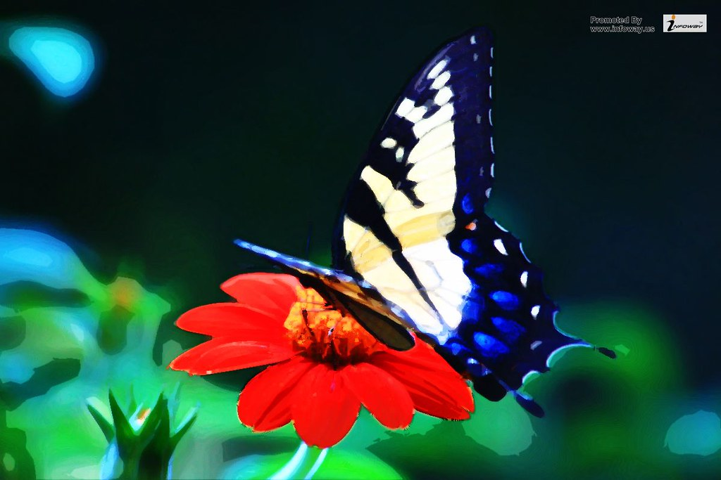 Beautiful Butterfly Hd Wallpaper Beautiful Butterfly Hd Wa Flickr