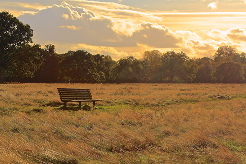uk london londra regnounito bushypark canonef24105mmf4lis canoneos60 andreapucci
