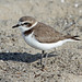 Kentish Plover - Photo (c) Jamie Chavez, some rights reserved (CC BY-NC)