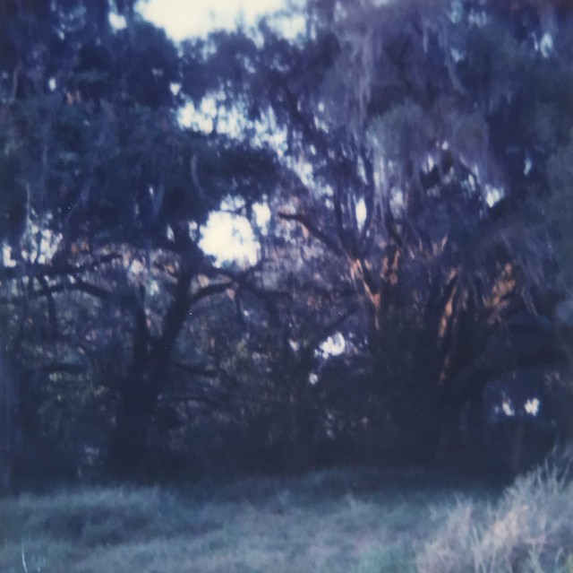 Southern Oaks and Moss