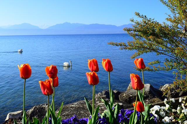 Lac Léman bei Morges VD