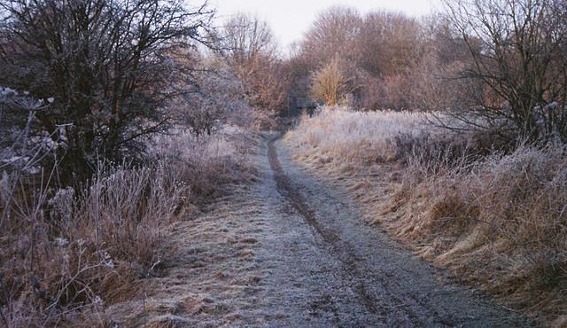 FILM - Frosty path on expired Kodak Advantix