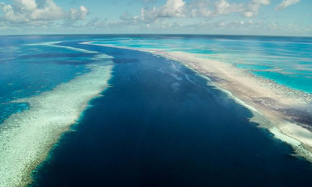Coral reef VI