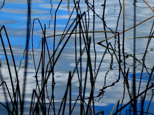 blue lake reflection reed water closeup weeds wetland laclahache bearpawlake