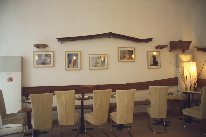Neko Cafe, Wien