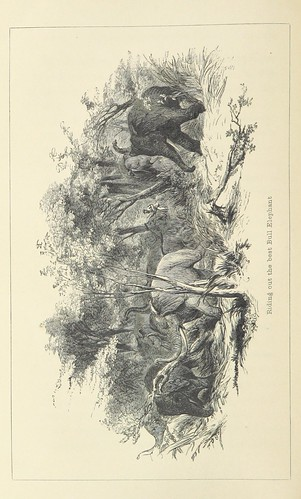 Image taken from page 390 of '[Five Years of a Hunter's Life in the Far Interior of South Africa. With notices of the native tribes, and anecdotes of the chase of the lion, elephant, hippopotamus, giraffe, rhinoceros, &c. ... With illustrations.]' | by The British Library