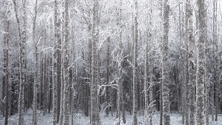 Frozen Forest   by TheFella