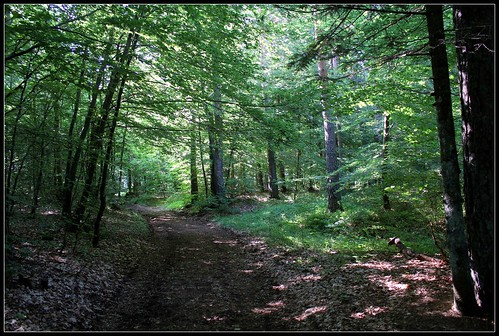 promenons nous dans les bois - Page 2 34297363776_53d59a0098