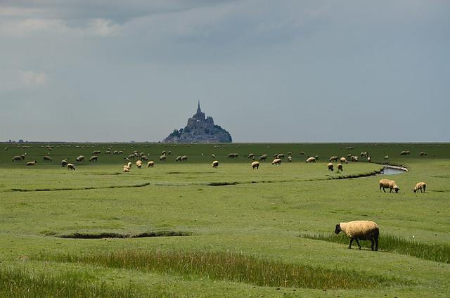 Un mont et des moutons