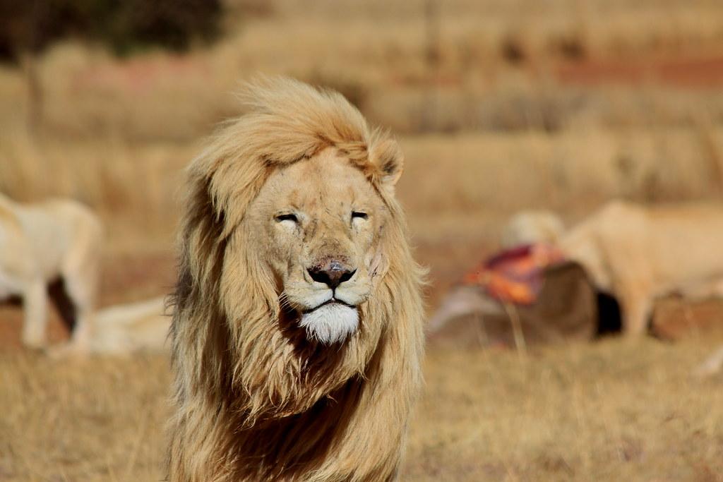 Bothongo Rhino & Lion Nature Reserve