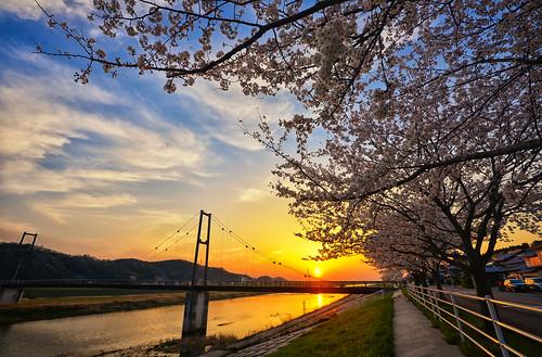 cherry cherryblossom sakura shimane nano izumo d600 1635mm colorefex