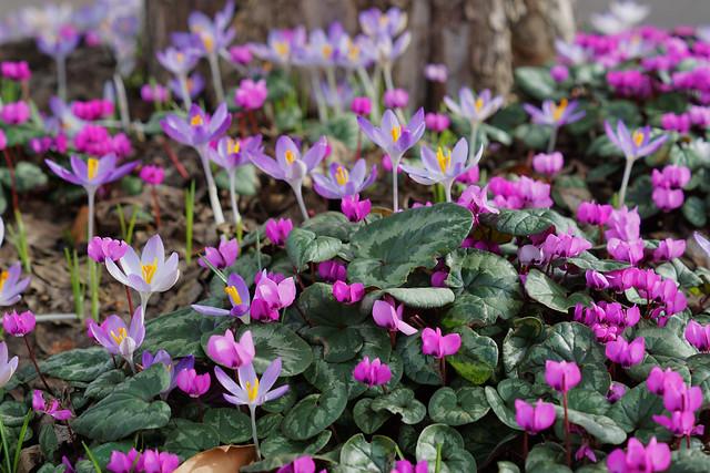 Ein pinker Blumenteppich