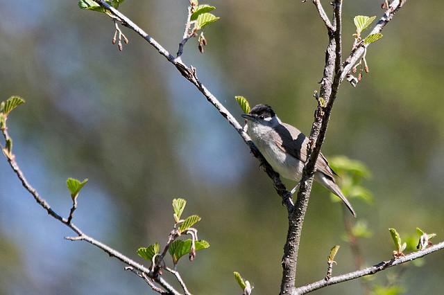 Domaine des oiseaux (Mazères/Ariège)