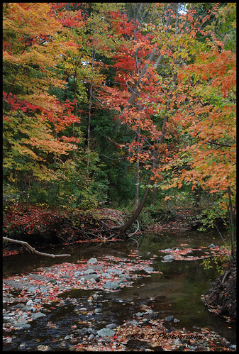 edwardsgardens scarborough fall water nature color leaves rocks reflections ontario outdoor forest trees tree creek stream landscape