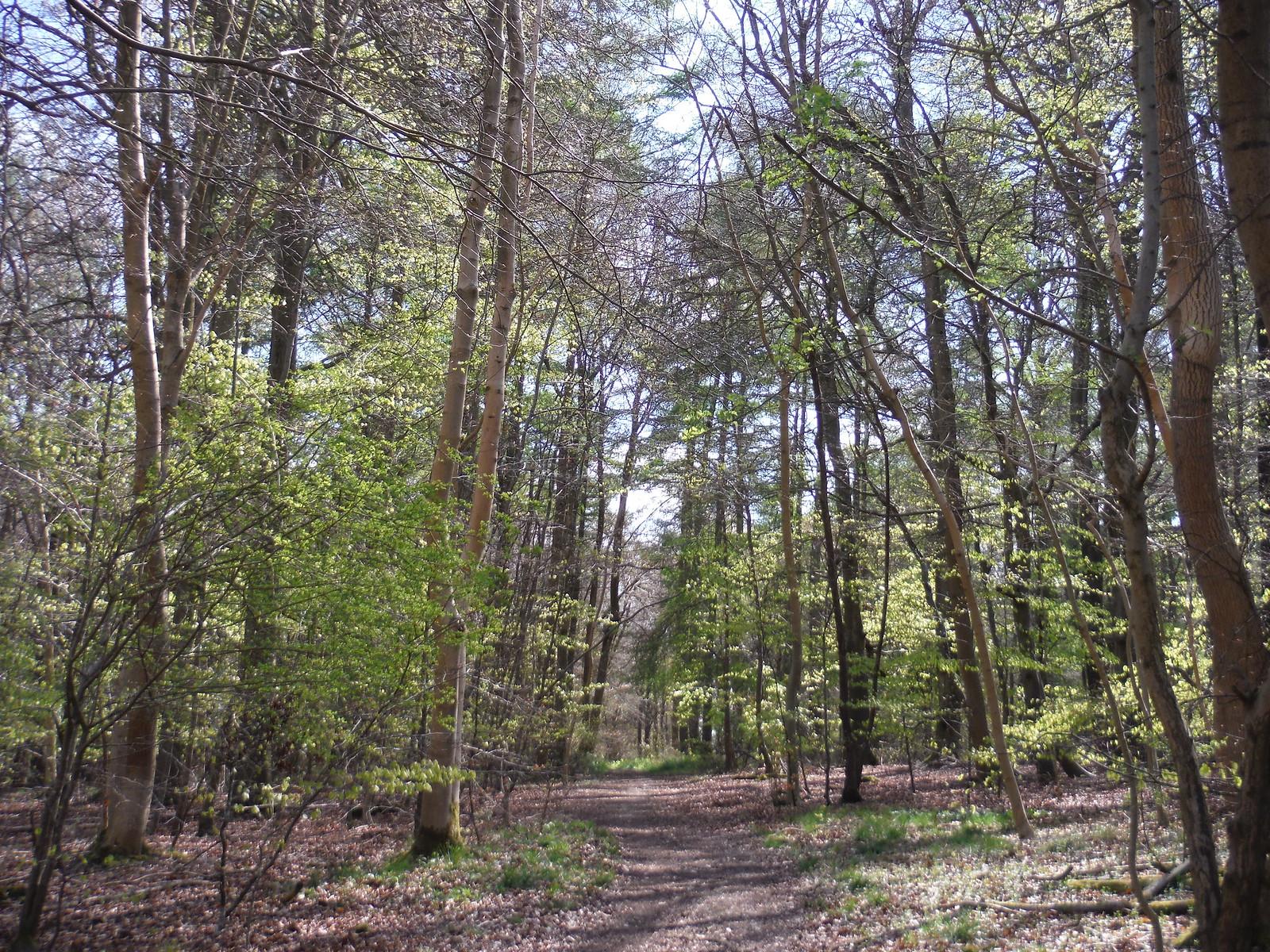 Ninn Wood SWC Walk 10 - Little Kimble to Saunderton