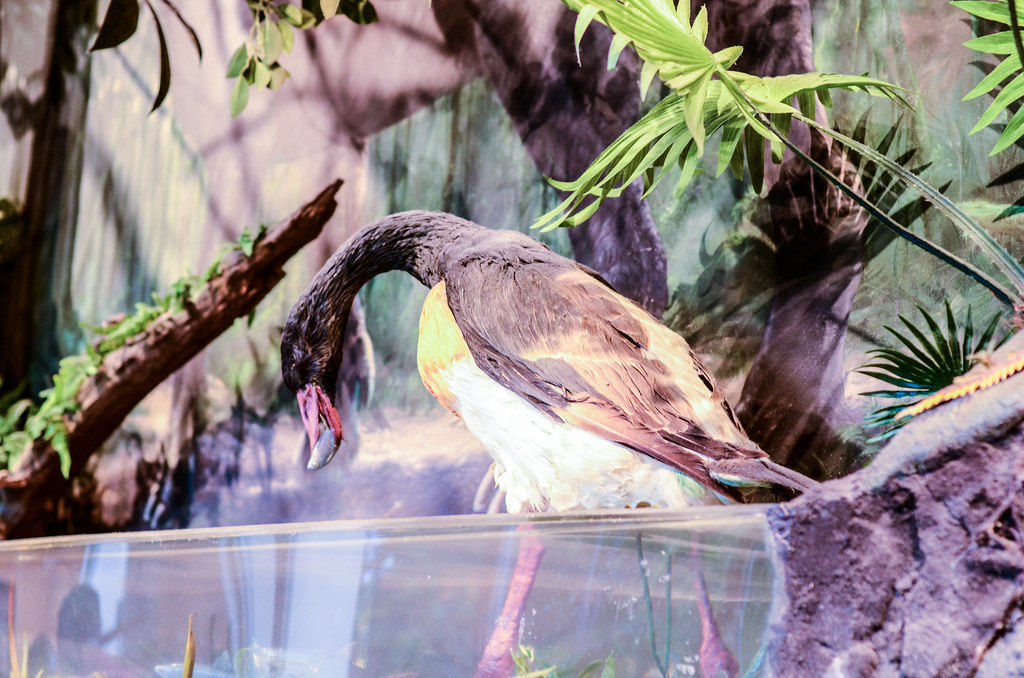 Dinosaur queue bird AK