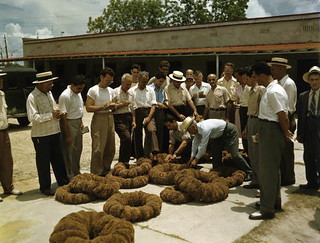 Sponge auction in Tarpon Springs
