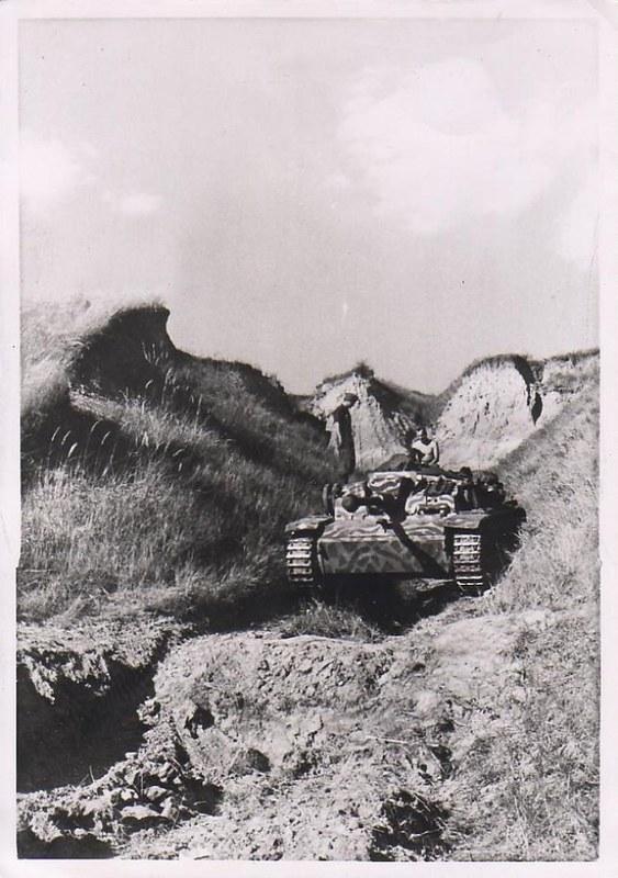 Panther & Tiger (6)