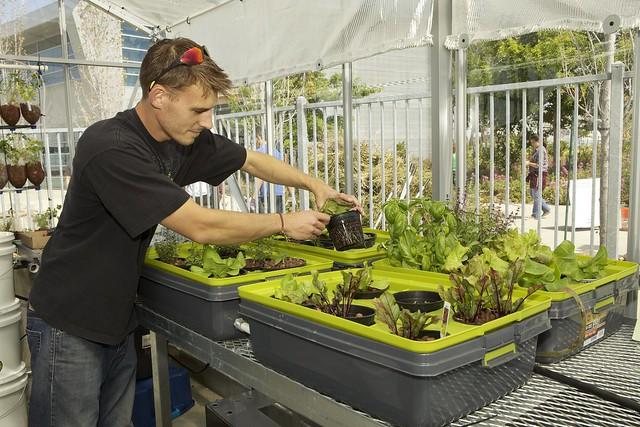 Organic Garden, Ohlone's Newark campus