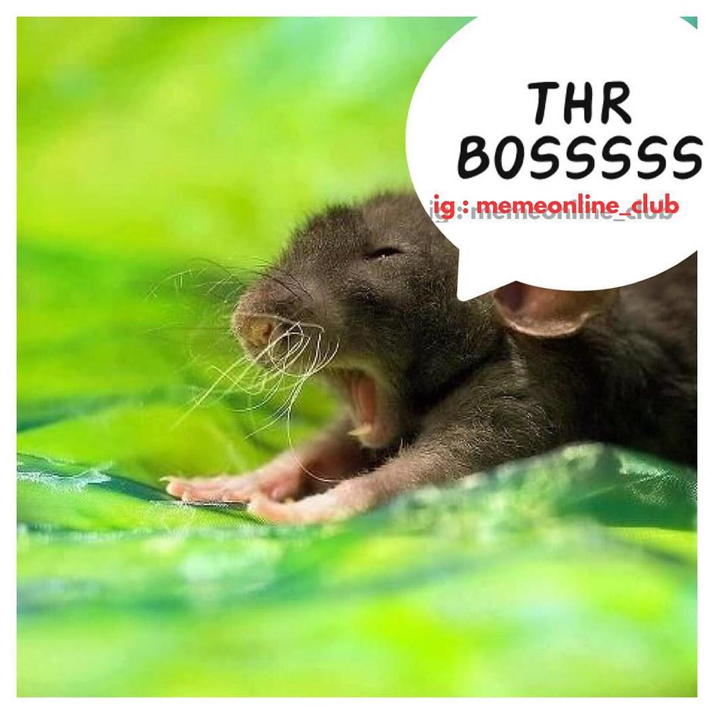 Tikus Thr Lebaran Lawak Kocak Humor Meme Memeonlin