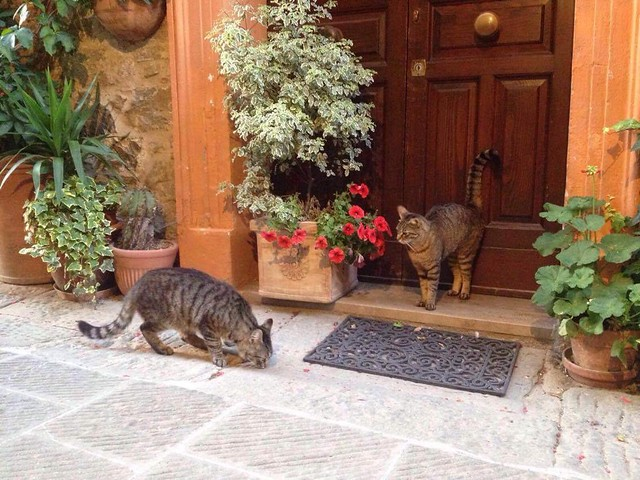 Preatty cats of #Castelnuovo 😻 #borghetto #italy #tuscany #like #follow #follow4follow #winterevening #enjoy #cat #preatty #countryside #discover #travel 😍☀️