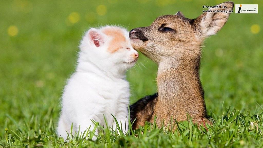 cute kitten and deer
