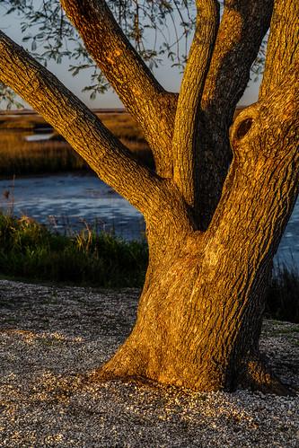 coastal estuary firstlight grass lowtide marsh marshland morning oquinnestuary saltmarsh seagrass sunrise tree trunk water wetlands hitchcock texas unitedstates us