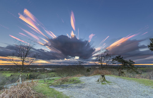 newforest rockfordcommon landscape bracken grass sun sunset tree woods animal horse cloudsstormssunsetssunrises cloud