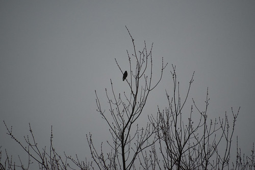 A Lone Crow | by Stephen Downes