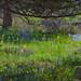 Wildflowers in a meadow under ponderosa pines.