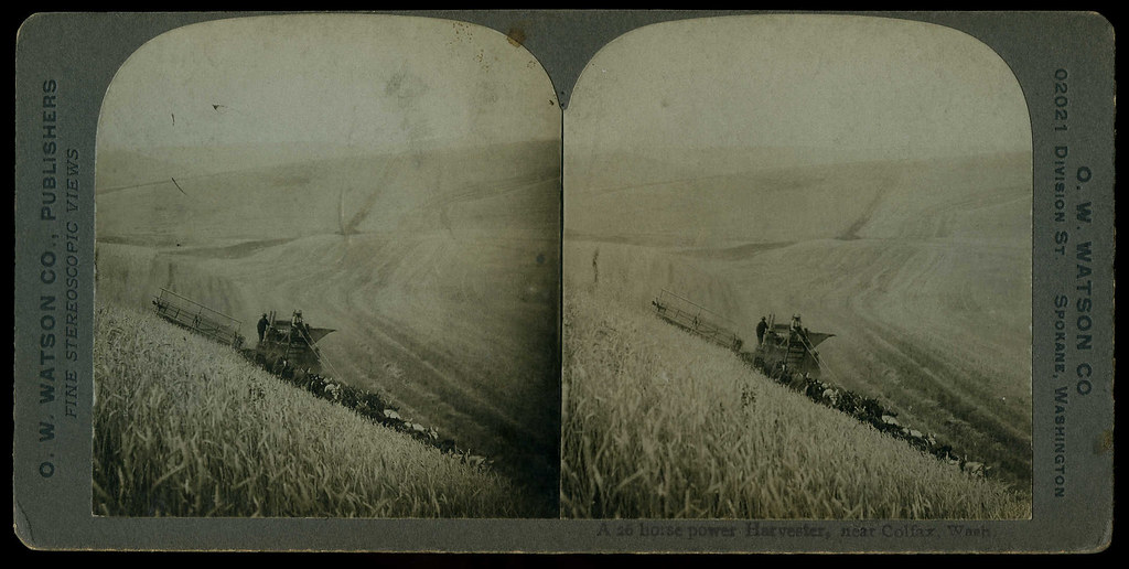 Combine Harvester on Frank Schreiber Ranch, circa 1900 - C