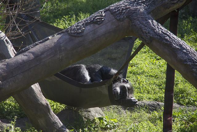 Houston Zoo_43