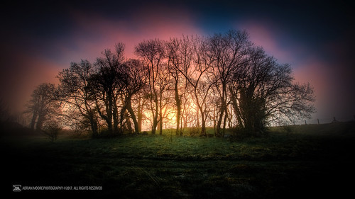 firstlight light sunlight sun sunrise photograph morning dawn trees fort bushfield loughrea galway ireland foggy fog