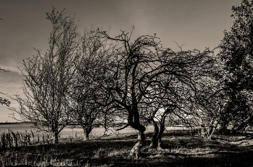 artistic countryside outdoors open air photography cwhatphotos angle view photographs photograph pic pics photo photos images foto fotos that have which contain with canon 7d eos dslr sacriston near nearsacriston tree trees wood autumn 1740mm zoom lens black white mono monochrome flickr