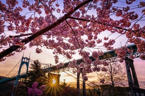 tree trees pink spring sprung season bridge frame sun sunset sunburst historic historical st johns park oregon portland downtown landscape canon