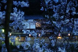 Sakura@bunkyouku_06
