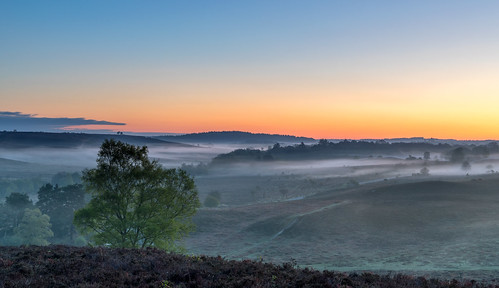 newforest mist dawn heath heather tree landscape cloudsstormssunsetssunrises
