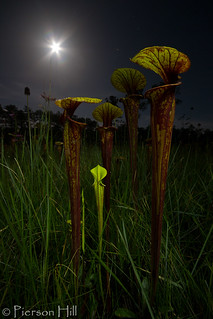 Supermoon Seepage Bog | by Pierson Hill