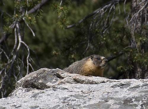 Marmot 105932