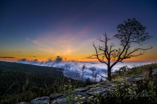 flower wall clouds sunrise virginia unitedstates huntly shenandoahnationalpark indianrunoverlook