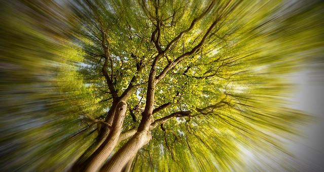 Tree-Zoom