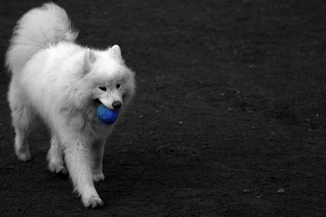Baloo and Blue