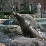 The same sea lion?