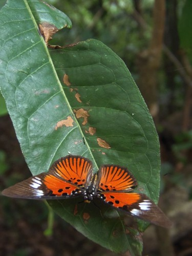 "Butterfly as seen in its natural environments during walking safari | by Watu Safaris - ""Traveling with Purpose"""