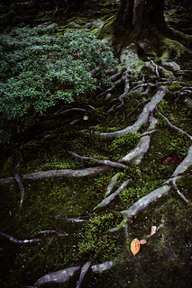 Roots | by Tigra K